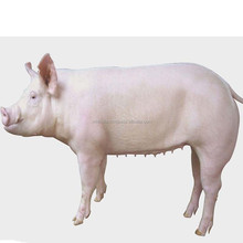 cheap farm slaughter house farm machinery agriculture equipment 10 Beef /Big Cattle, 30 hogs/Pig, or 50 Sheep/Goat per Day