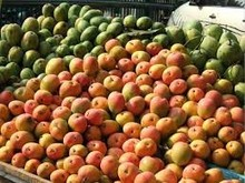 fresh mangoes for sell in bulk from South Africa