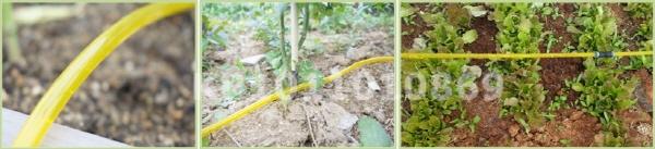 drip irrigation system.jpg