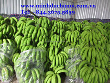 Vietnam Cavendish banana for export by container