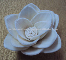 Sola flor de loto