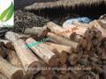 buen precio eaculyptus del carbón de leña