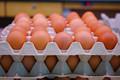 Fresco fértil huevos de gallina at precios baratos