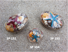 Oval Midrib Shellpack with Colored Finger Starfish