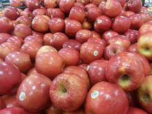 Fresh Fuji apple (long-term cooperation with India,EU,RU market )