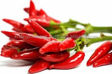 HOT CHILI FROM VIET NAM