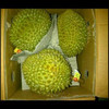 FRESH DURIAN FOR WHOLESALE