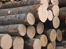 European Lumber Ash White Wood Logs