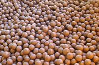 Organic Macadamia Nuts With High Quality/EU Certified........00905374454895