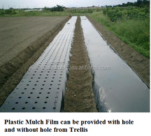Perforated Plastic Mulch Film for Tomato and Pineapple plantation-agriculture all purpose