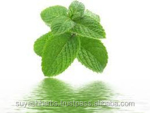 Spearmint Oil Supply Any Where In India
