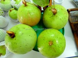 viet nam fresh Star apple