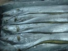 Wholesale low price high quality Frozen Ribbon Fish