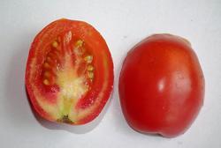 Onion, Potato, White Kidney Beans, Tomato,pineapple, Cherry Tomato exporter