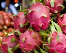 100% Natural Fresh Dragon Fruit from Thailand