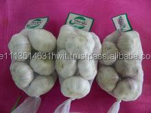 Farming Fresh Ginger And Garlic