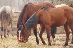 Horse Equine Probiotics Feed Supplement