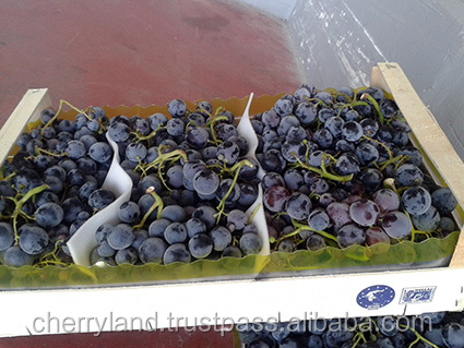 Black Grapes Grapes Ribier Black Muscat