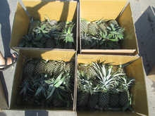Supply Fresh Pineapple Fruit From Vietnam With Best Price And Hight Quality