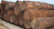Forest price !!!!Teak Wood / lc payment term/ready for Exportation