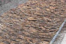 Variety Smoked Mackerel, Sardine , Bonito and Dried Maldivian Fish