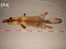 High quality Skin of fox Ukrainian fur