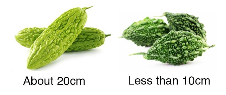 bitter-melon.jpg
